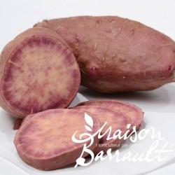 Patate douce Sakura