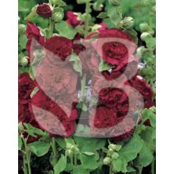 Alcea rosea pleniflora rouge