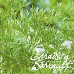 Absinthe (plante utile)