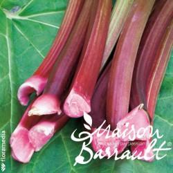 Rhubarbe (plante utile)