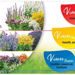 ILV - Vivaces Godet