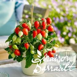 Tomate Plumbrella ® red